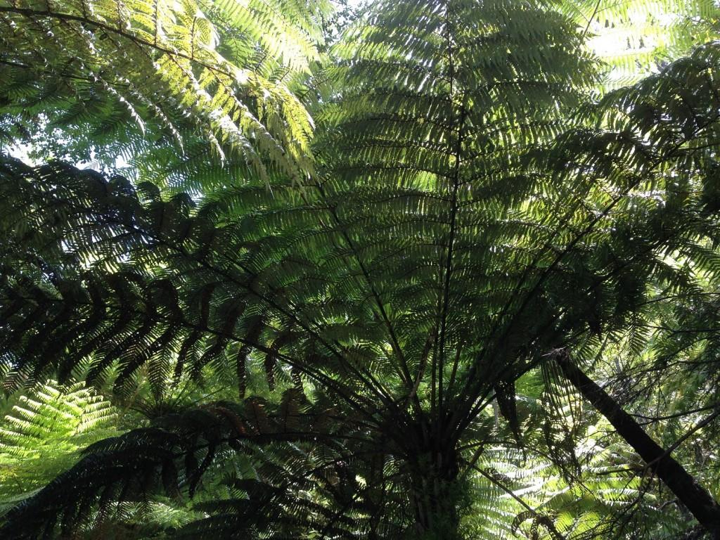 New Zealand 07
