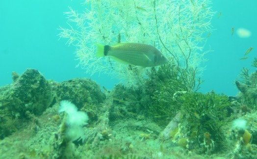 Vie sous marine Milford Sound